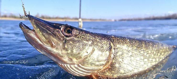 Рыбалка в Астрахани в апреле