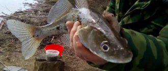Рыбалка в Астрахани лето 2018