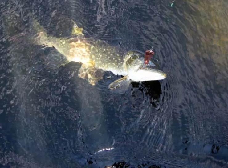 Рыбалка в Астрахани в августе