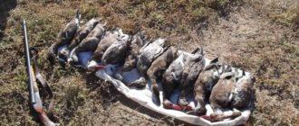 Охота в Астрахани