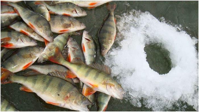 Любители зимней рыбалки