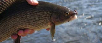 Рыбалка в Астрахани в октябре